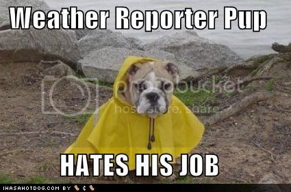 photo weather-reporter-dog.jpg